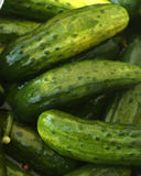 New Half Sour Pickles royalty free stock images