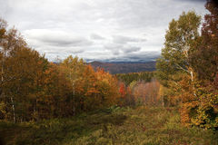 New Hampshire Foliage on Hillside. Colorful fall foliage on hillside in White Mountains of New Hampshire Royalty Free Stock Images