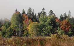 New Hampshire foliage in Northern New Hampshire Royalty Free Stock Photography