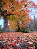 New Hampshire Foliage. Foliage season is something to be anticipated every year in New Hampshire stock image