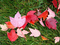 New Hampshire Foliage Stock Photo