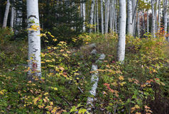 New Hampshire; Montañas blancas en otoño Fotos de archivo
