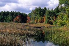 New Hampshire Pond. Fall foilage, puffy white clouds. Pawtuckaway Park, Rockingham County, New Hampshire stock photos