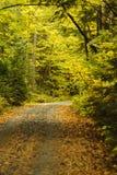 New Hampshire-Schotterweg, der durch Holz kurvt lizenzfreie stockfotografie