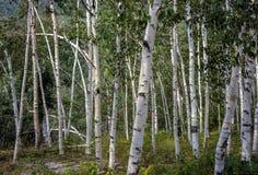 New Hampshire; White Mountains in autumn Stock Image