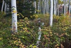New Hampshire; White Mountains in autumn Stock Photos