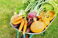 The new harvest. Many different vegetables lie in the garden cart Stock Photo