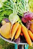 The new harvest Stock Photos