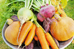 The new harvest. Many different vegetables lie in the garden cart Royalty Free Stock Images