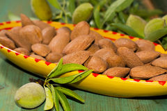 New harvest of almonds, ripe almonds and fresh green almonds on Stock Photos