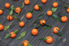 The new harvest of tangerines lying in a rows on dark wooden textural background Stock Photography