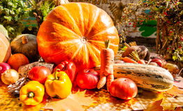 New harvest of vegetables Stock Images