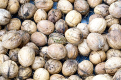 New harvest walnut. S in a wood bowl Stock Photography