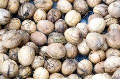 New harvest walnut Stock Photography