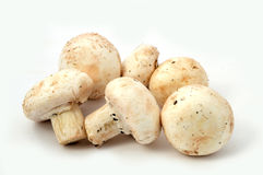 New and high quality images of cultured mushrooms. The fungus can be grown in places where the temperature and humidity can be kept under control, easy to Royalty Free Stock Image
