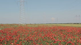 New high voltage power lines on poppy field in Crimea. stock footage