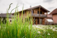 New home: Dandelion flowers in front of a house, springtime. Faded dandelion flowers in foreground, blurry house in the background new home spring springtime royalty free stock photo