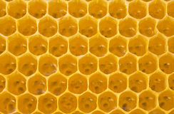 New honeycomb Stock Photography