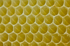 New honeycombs Royalty Free Stock Image