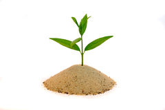 A new hope. A young shoot grows out of a small pile of sand. All isolated on white stock photos