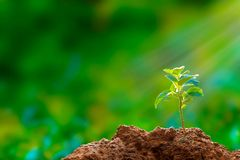 New hope: tree seedling royalty free stock image