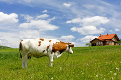 Free New House And Cow Stock Images - 14365554