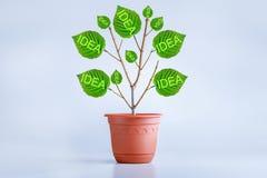 New idea creative concept. Birth, growing idea. Plant royalty free illustration
