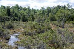 New Jersey Bog Stock Images