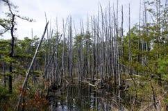 New Jersey Bog Royalty Free Stock Photos