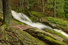 New Jersey Forest Stream Royalty Free Stock Images