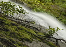 New Jersey Forest Waterfall Royalty Free Stock Images
