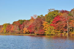 New Jersey lake, foliage under autumn sun. Foliage, autumn, colors, still, water, ripple, reflection, landscape New Jersey, blue, sky, clouds, sunset, red Royalty Free Stock Image
