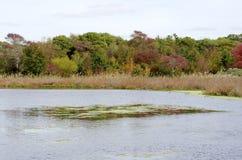 New Jersey Marsh Royalty Free Stock Photo