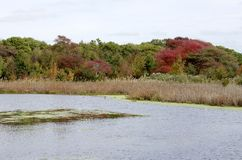 New Jersey Marsh Stock Images