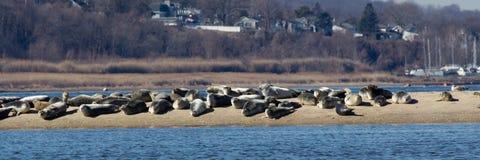 New Jersey Seals Stock Photos