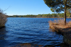 New-Jersey Teich im Winter Lizenzfreies Stockbild