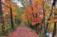 New Jersey trail in autumn leaves foliage Royalty Free Stock Photography