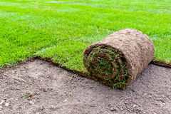 New lawn Royalty Free Stock Images