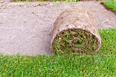 New lawn roll Royalty Free Stock Image