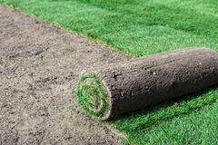 New lawn Stock Image