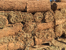New lawn sod Stock Images