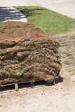 New lawn sod Stock Photography