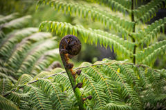 New leaf of fern stock photos