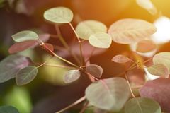 New leaf growth in spring. stock photography