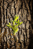 New leaf on old bark Royalty Free Stock Images