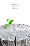 New leaves appear from dead stump royalty free stock photography
