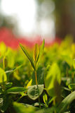 New leaves Stock Image