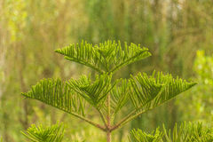 New leaves Royalty Free Stock Photography
