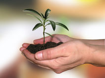 A new life. Hands holding a small plant Stock Photography