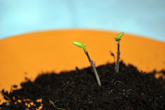 New life. The beginning of a new life Royalty Free Stock Image